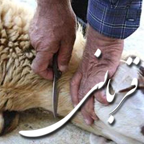 ثواب قربانی کردن چقدر می باشد؟ آیا از گوشت قربانی خودمان استفاده کنیم مورد قبول است؟